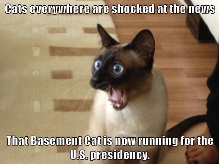 Cats everywhere are shocked at the news That Basement Cat is now running for the U.S. presidency.
