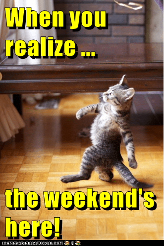 weekend,caption,Cats