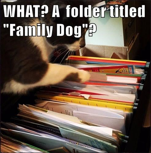 animals file family caption Cats folder - 8810963968