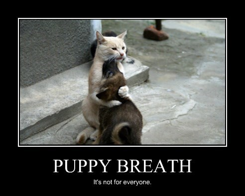 PUPPY BREATH It's not for everyone.