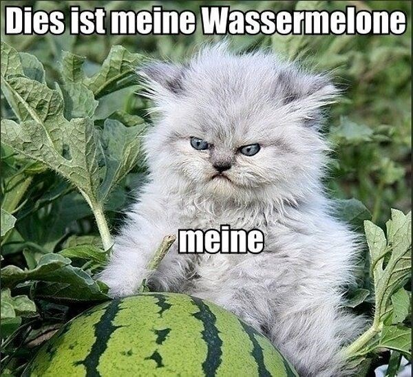 german,watermelon,caption,Cats