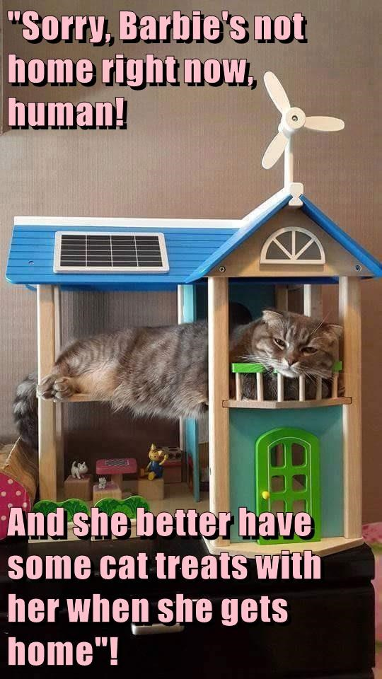 Barbie,house,caption,Cats