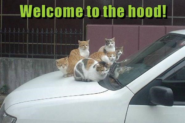 hood,caption,Cats