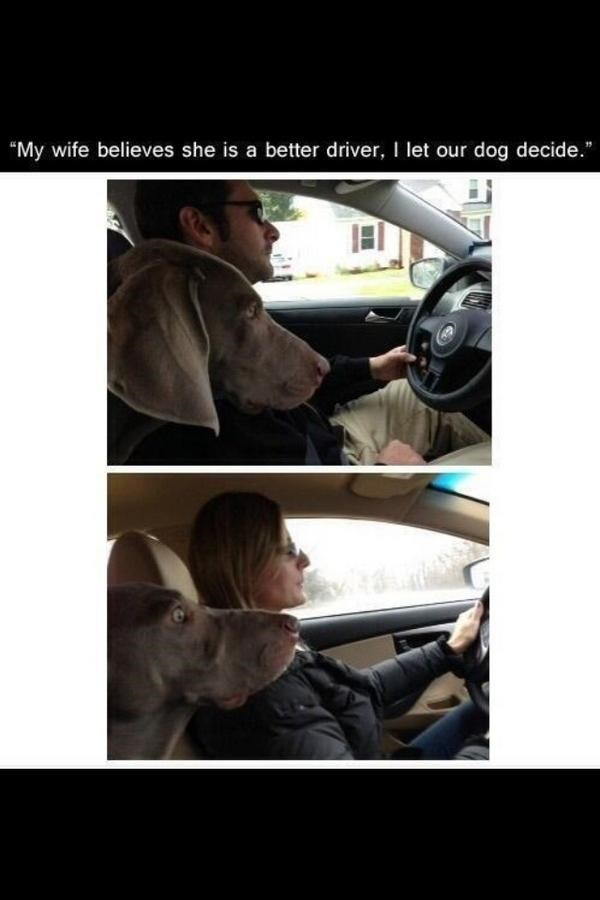 dogs,marriage,wife,driving,bad driving