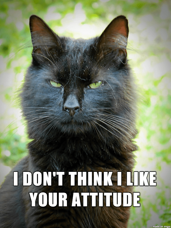 attitude caption Cats