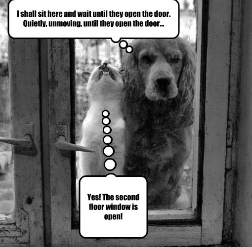 wait cat dogs open sit caption window