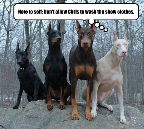 dogs colors doberman caption