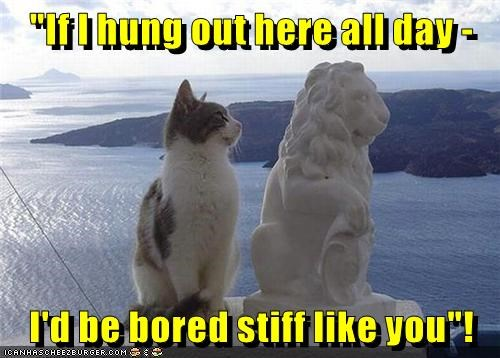 animals stone bored stiff caption Cats - 8811759104