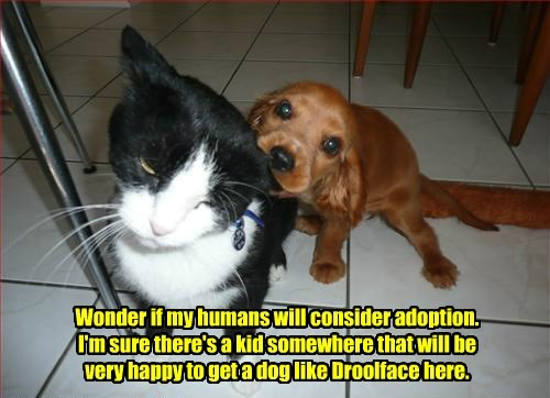 dogs,adoption,caption,Cats