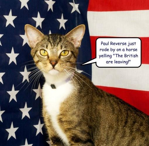 cat brexit leaving British Paul reverse caption - 8811778048