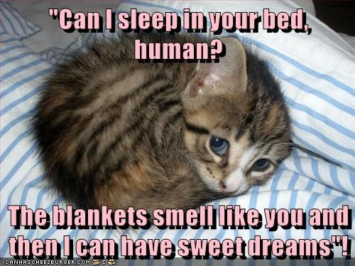 """Can I sleep in your bed, human?  The blankets smell like you and then I can have sweet dreams""!"