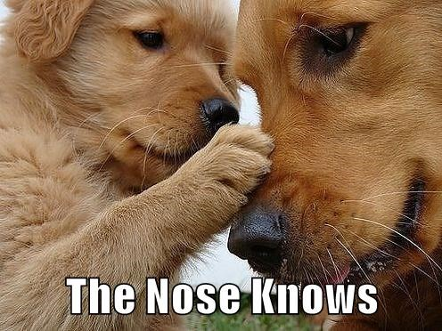 animals dogs nose caption knows - 8811812352
