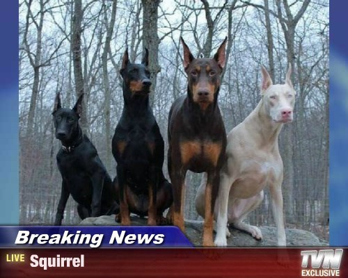 dogs,squirrel,Breaking News