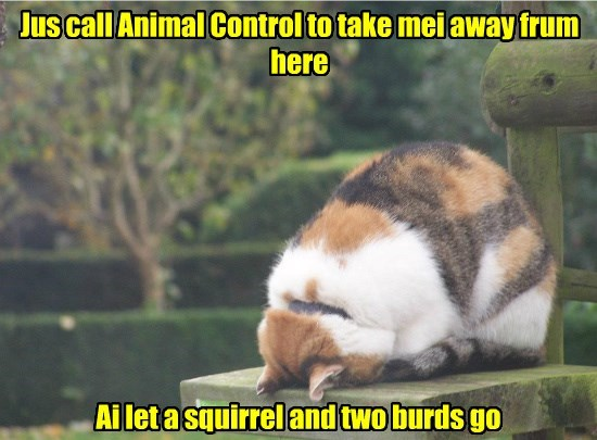 cat birds call me squirrel take control go caption animal let away - 8811854848