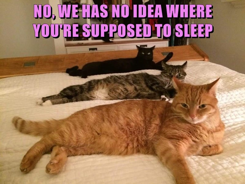 NO, WE HAS NO IDEA WHERE                                         YOU'RE SUPPOSED TO SLEEP