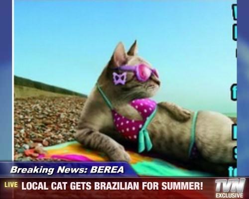Breaking News: BEREA - LOCAL CAT GETS BRAZILIAN FOR SUMMER!