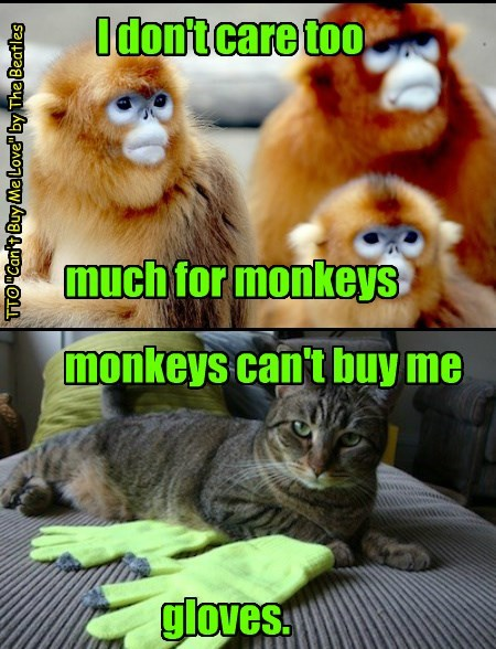 Tell That You Want The Kind Of Things That Monkeys Just Can't Buy