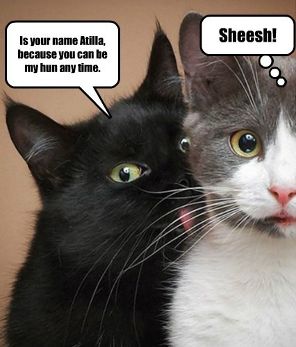 pickup lines cat memes - 8811908096