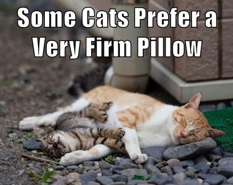 Pillow,caption,Cats