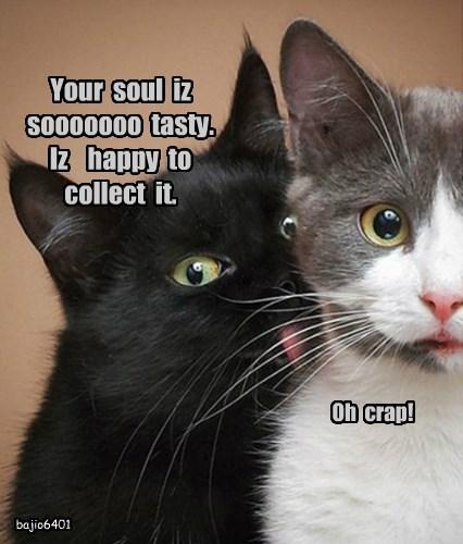 Basement Cat LOVES Soul Food