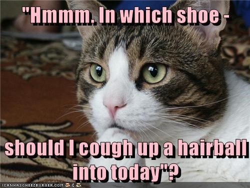 """Hmmm. In which shoe - should I cough up a hairball into today""?"