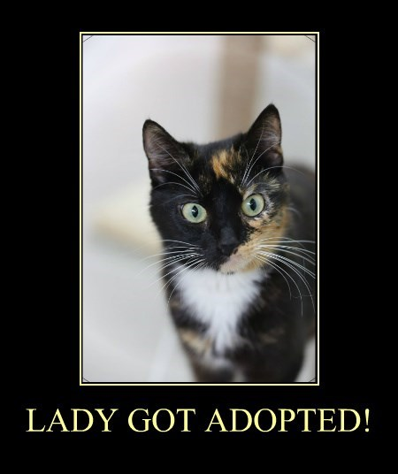 LADY GOT ADOPTED!