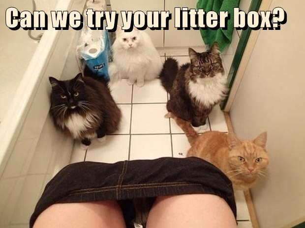 animals litter box caption Cats - 8811979008