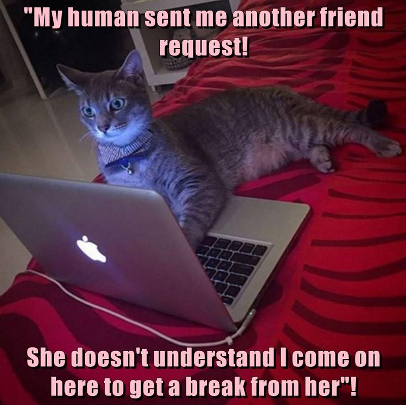 animals cat caption break friend human request sent
