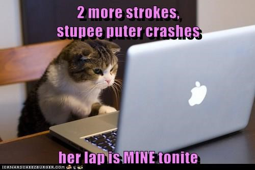 animals cat caption computer crashes lap mine more two strokes