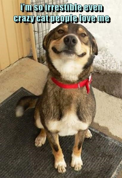 animals crazy dogs cute love caption smile - 8812048128