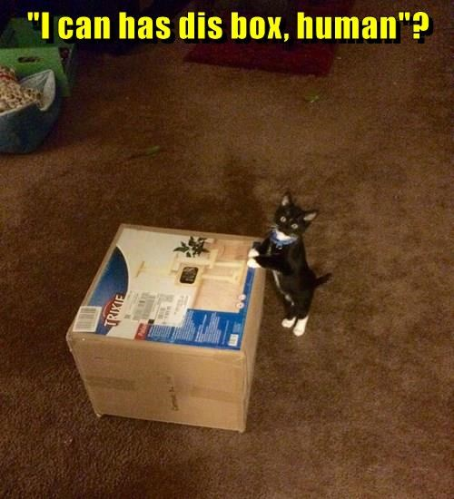 animals box human caption Cats - 8812049152