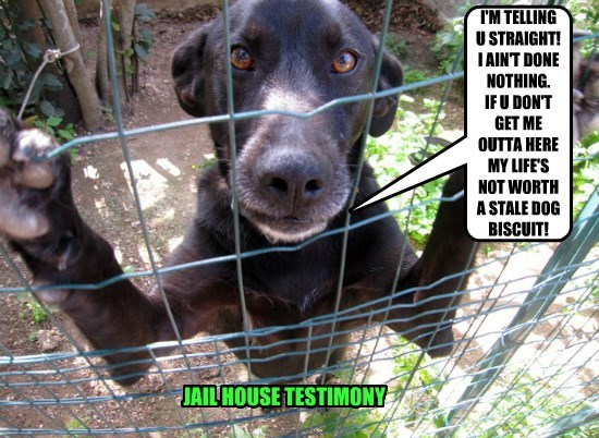 dogs jail fence caption guilty - 8812050176