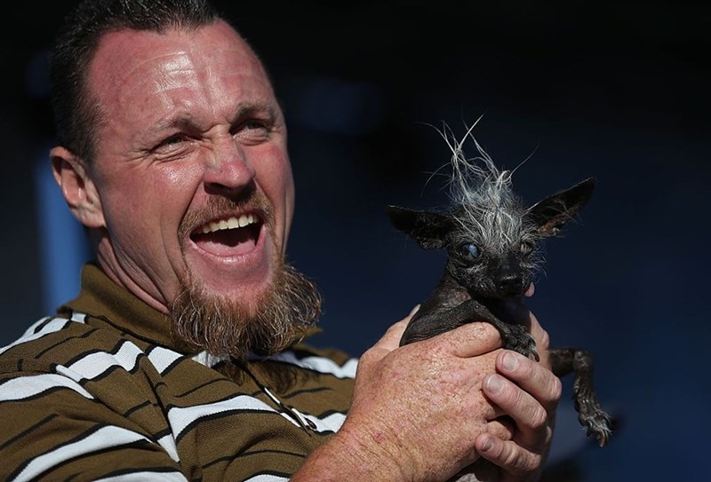 worlds-ugliest-dog-competition-winner-is-terrifying