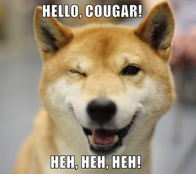 animals dogs cougar doge caption shiba inu - 8812061184