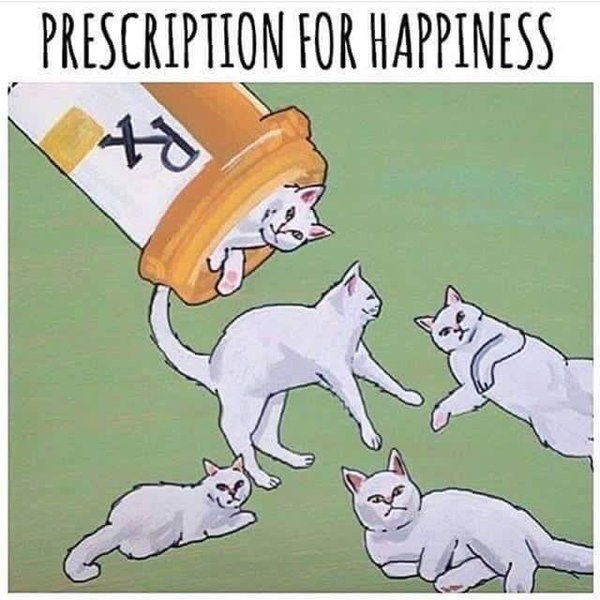 ask your doctor if cats are right for you