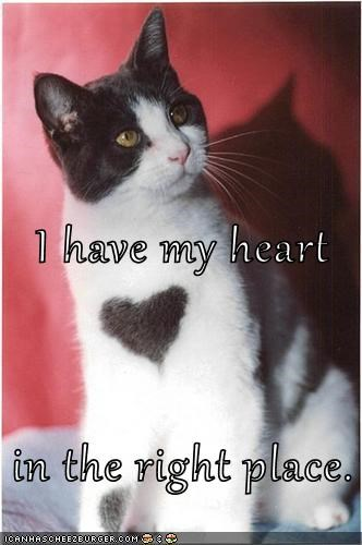 I Have My Heart In The Right Place Lolcats Lol Cat Memes