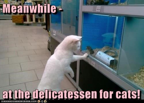 animals cat delicatessen caption - 8812222464