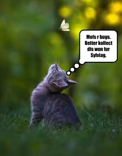 BAK Bugs for Sylviag