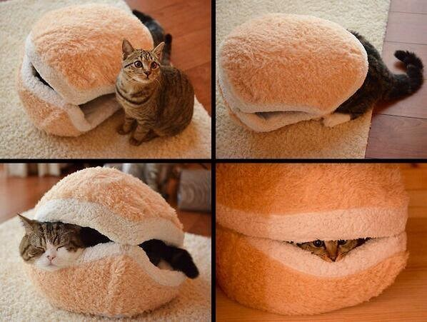 i can become cheeseburger