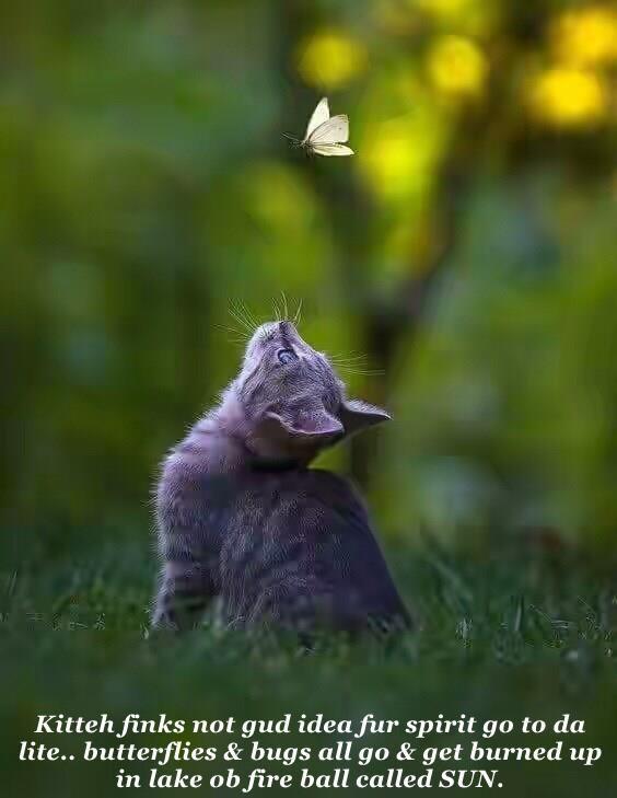 Kitteh finks not gud idea fur spirit go to da lite.. butterflies & bugs all go & get burned up in lake ob fire ball called SUN.