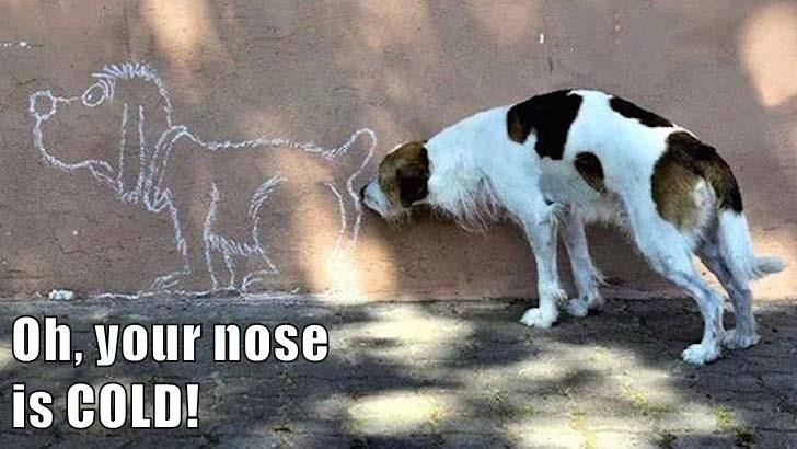 dogs,cold,nose,caption,wall