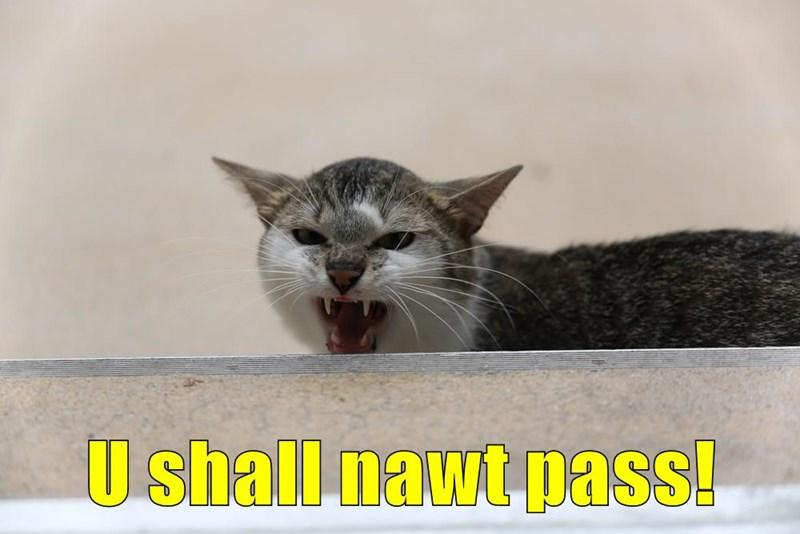 U shall nawt pass!