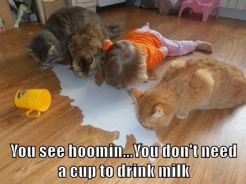 You see hoomin...You don't need                  a cup to drink milk