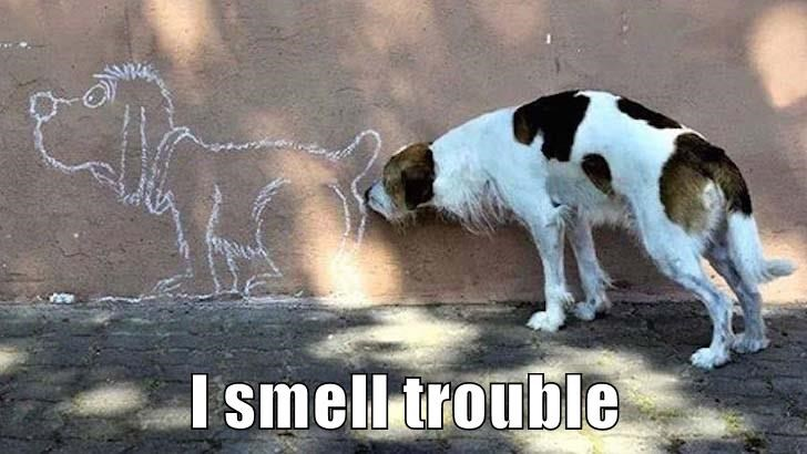 dogs,smell,caption,trouble,wall