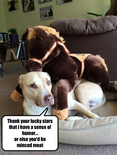 humor,dogs,caption,horse