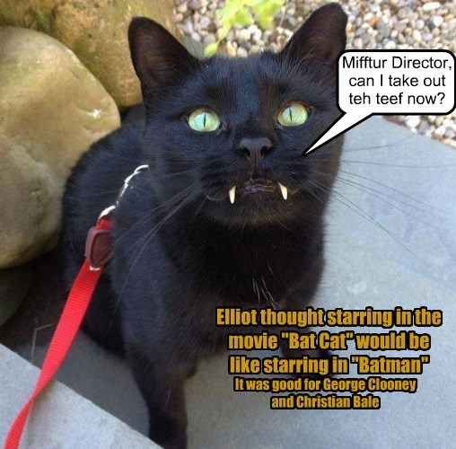 cat out director teeth take batman caption - 8812497152