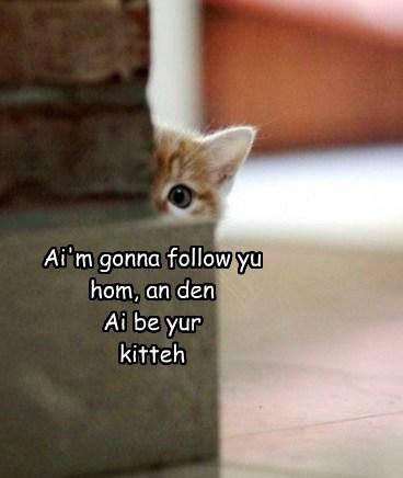 Honest Mom, He Followed Me Home!
