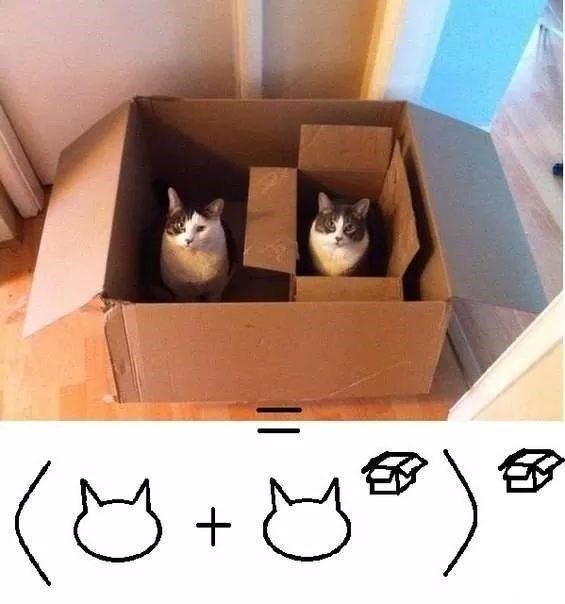 can you solve this cat math problem