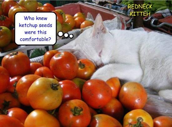 Redneck kitteh