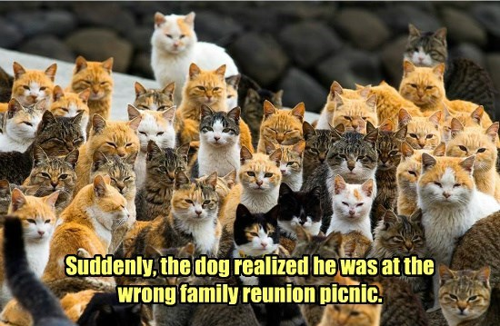 dogs reunion wrong family caption realized Cats